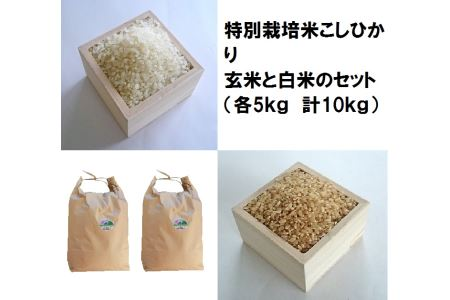 MS-16 特別栽培米こしひかり白米と玄米のセット(各5kg)