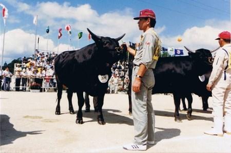 C306:藤増牧場しまね和牛サーロインステーキ 540g