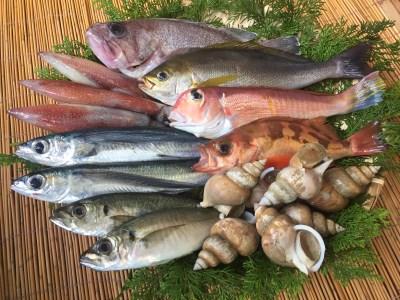 B252 「一日漁」おまかせ鮮魚