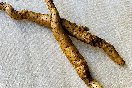 【限定30セット】栽培期間中、農薬・化学肥料不使用の自然薯300g[1~2本]【1209348】