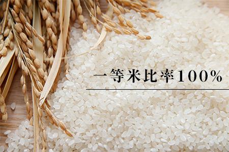 高津川の恵み 特別栽培米ヘルシー元氣米5kg×2袋(10kg)(令和2年産)【1209635】