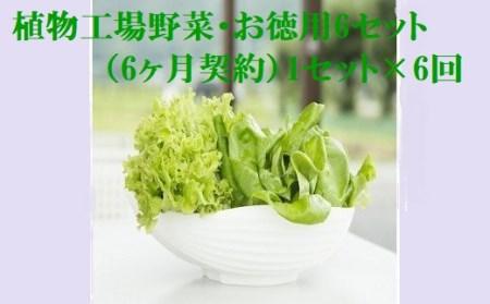 5-03 植物工場産野菜・お徳用6セット(6ヶ月契約)1セット×6回
