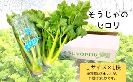 31-006-001.そうじゃのセロリ(Lサイズ1株)