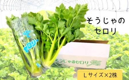 31-008-001.そうじゃのセロリ(Lサイズ2株)