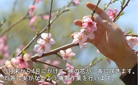 ●先行予約受付●岡山県産 白桃(早生種)約1.3kg(5~6玉)【配達不可:離島】