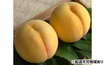 ●先行予約受付●赤磐市産 黄金桃 約2.0kg 6~8玉