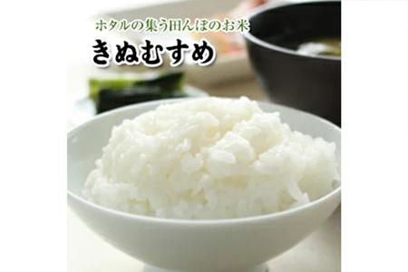 【2616-0087】真庭市産きぬむすめ 無洗米5kg