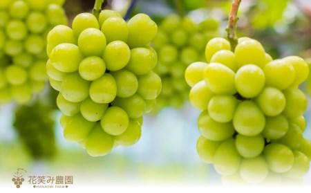 【2616-0150】3M-2 花笑み農園 岡山特産ぶどう3種セット シャイン入り (3房)