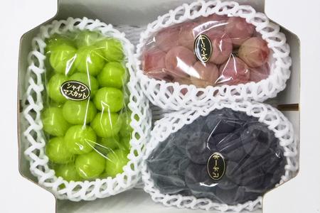 【2616-0002】大粒ぶどう3種セット (シャインマスカット入り)