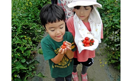 <2021年6月初旬よりお届け>北海道壮瞥町 大作農園 カラフルミニトマト狩り 30分×5回分チケット