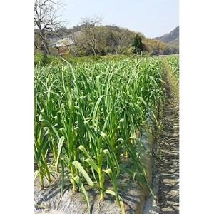 【2021年6~8月発送】ご家庭用 乾燥にんにく 約3kg(高松市)【1104896】