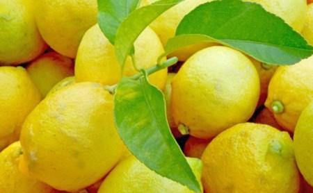 豊島レモン2.5キロ