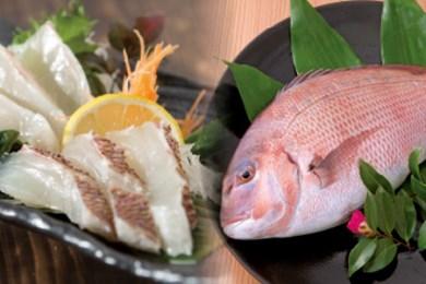 H003-1 最高峰評価のブランド鯛!「海援鯛」1匹フィーレセット