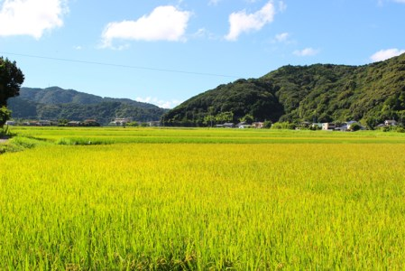[024108]【新米】ふくい農園のおいしいお米(もち米8kg)