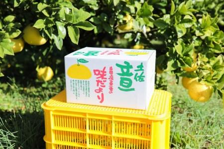 クチコミで人気の「浜田農園」土佐文旦 5kg(家庭用)