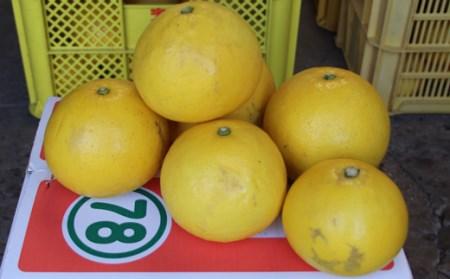 森下農園の土佐文旦【家庭用】5kg(L~4L約8~13個前後)