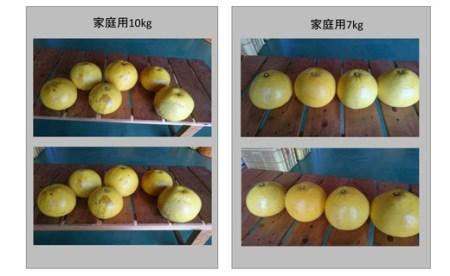 成田果樹園の文旦【家庭用】10kg