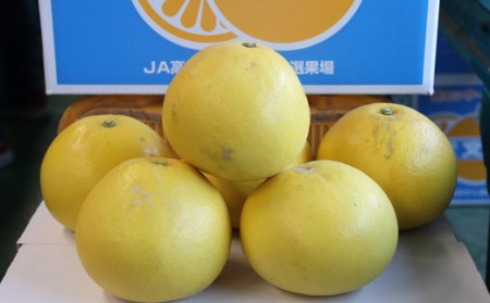 JA高知県宿毛支所文旦研究部会の土佐文旦10kg家庭用