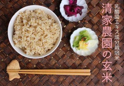 【新米】酵素が2倍!「乳酸菌生成エキス栽培」玄米 3kg