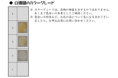 [051238]深海の秘宝:サクラ咲くピアス/イヤリング