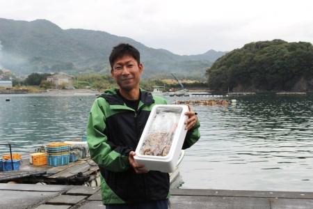 [037005]チャンバラ貝 1kg