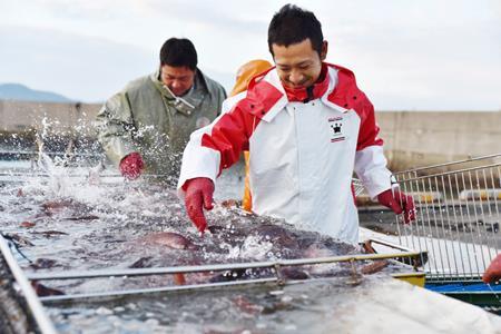 [009004]高知産の生姜を食べて育った、新鮮絶品の「生姜真鯛」(贅沢加工)