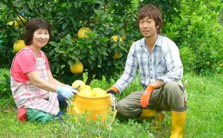 龍馬がゆく園芸の河内晩柑9kg(家庭用)
