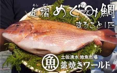 AF-12 足摺めぐみ鯛 活〆1匹まるごと(下処理可)