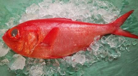 【C-32】金目鯛鍋用カット(冷凍1kg)