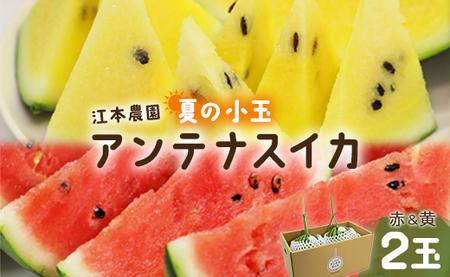 【期間限定】江本農園 夏の小玉アンテナスイカ 2玉ギフト箱 赤&黄セット U-84