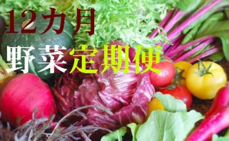 野菜【12カ月】定期便 香南市のお野菜詰め合わせコース T-16