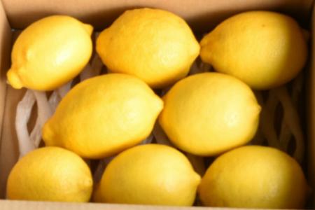 人気ローズガーデンの減農薬レモン1.3kg A-288