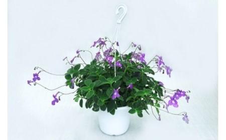 季節の鉢植えお楽しみセット