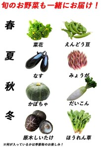 こんなの探してた!【少量多品種】四万十育ちの地採れ野菜セット Qjs-14