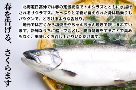 北海道日高産 天然「サクラマス」切身セット[B15-532]