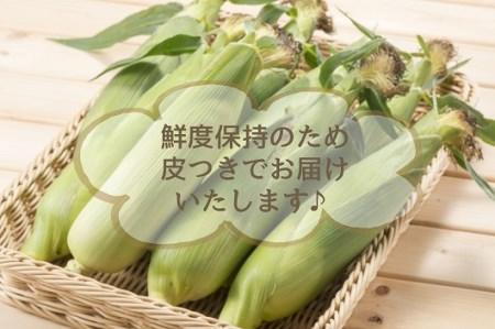 朝採れを直送!スイートコーン【ゴールドラッシュネオ】7㎏!(15本以上)