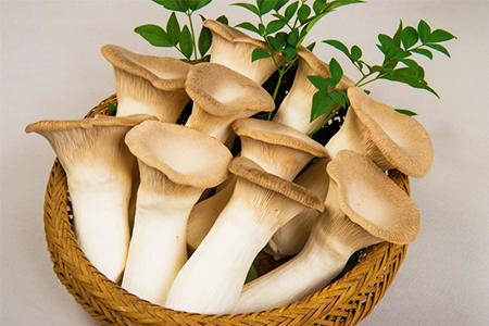 茸の生産一筋40年 「山のホタテ」 エリンギ ギフトセット
