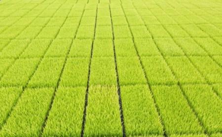 K433-05 野上耕作舎 野上米ヒノヒカリ 無洗米5kg