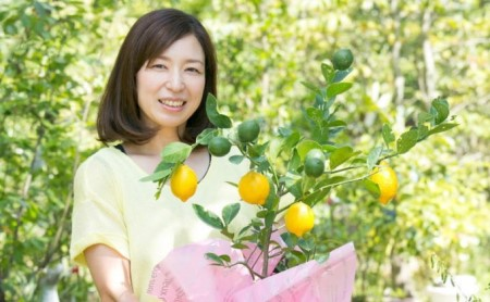 ガーデニング果樹・レモンの木 ★ガーデニングショップ四季の里