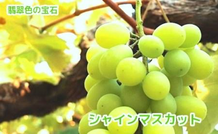 c-32 【先行予約】武冨さんちの種なしぶどう贅沢食べ比べセット