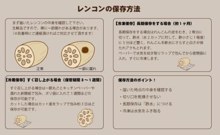 A5-052 佐賀県産泥付きレンコン(3kg) 5千円コース