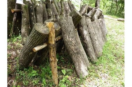 脊振の椎茸原木 (H044101)