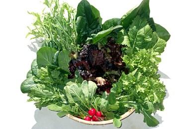 有機栽培 葉物野菜セット(サガンベジ) 寄付金:10000円