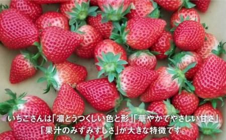 【先行予約】期待の新ブランドいちご「いちごさん」(化粧箱入り400g) [IBJ002]