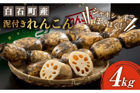 【G-3】白石産泥付きれんこん(4kg)