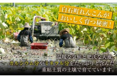 【レンコンの名産地!】白石町産 泥付きれんこん(4kg) 【佐賀県農業協同組合】[IAK015]