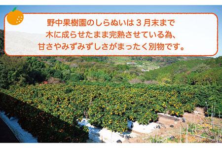 【4月上旬以降発送】ハウス完熟しらぬい(デコポン)約4キロセット [LEJ004]