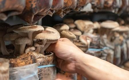 AA019旨味の決め手は名水にあり 肉厚干し椎茸