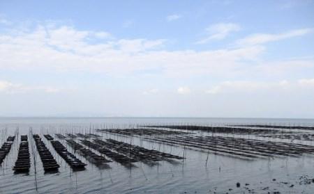 AA047有明海が育んだ海苔を食べ比べ 贅沢海苔バラエティセット