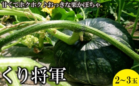 AD200【大玉限定】ホクホク甘い! 長崎県産 くりかぼちゃ 「くり将軍」 約4kg(2玉)